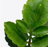 Organic Leaf of Life