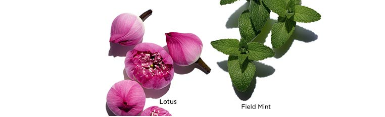 Clarins Treatment Oils contain pure plant extracts, nothing else.