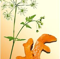 Organic Wild Chervil and Turmeric